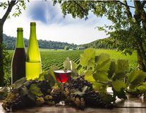 Re vinho Fotografia de Stock Royalty Free