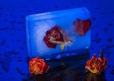 Róże w lodzie Obraz Stock