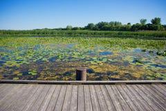 Área en el parque nacional de Pelee del punto, Ontario, Canadá del pantano Fotos de archivo