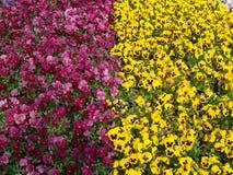 Rea och guling blommar i en för  för den ÅŒdÅ rien KÅ Royaltyfri Foto