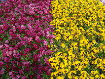 Rea und gelbe Blumen in ÅŒdÅ- ri KÅ  en Lizenzfreies Stockfoto