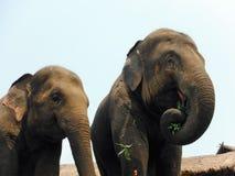 Reabilitação do elefante, Chang Mai, Tailândia Imagem de Stock
