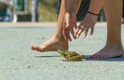 Reach Out and Touch a Frog Royalty Free Stock Photography