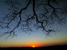 Reach Out and Touch the Sky. A majestic tree spreading it´s branches out and honouring the sunset Stock Photos