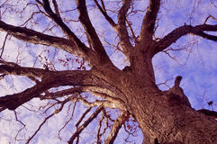 Reach for the Sky Royalty Free Stock Image
