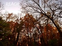 REACH Trees. Be like the trees, reach! Fall in Michigan Royalty Free Stock Photos