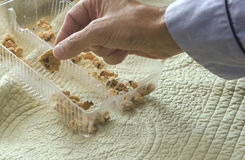 Reaching for cookie crumb Stock Photography