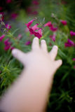 Reaching for a flower Royalty Free Stock Photography