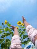 Reaching out to sunflowers Stock Image