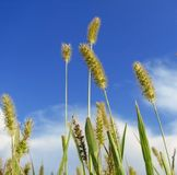 Reaching for the sky. Plants reaching for the blue sky Stock Image