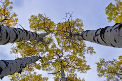 Reaching for the Sky Royalty Free Stock Image