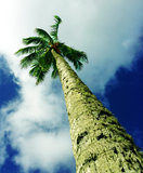 Reaching For the Sky Royalty Free Stock Images