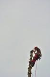 Reaching the top, professional lumberjacker at work Stock Photo