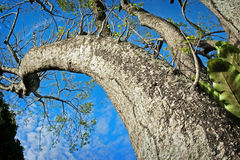 Reaching towards sky Royalty Free Stock Photography