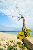 Reaching for water. A tree reaching for the sea water Stock Photo