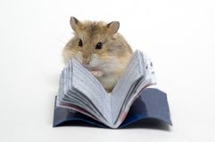 Read the hamster. The white background reading hamster