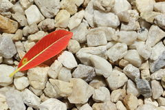 Read leaf on pebble Royalty Free Stock Photography