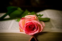 Read is love. This beautiful rose shows why i love the photography Royalty Free Stock Photo