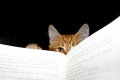 Read to me. Young cat vying with book for owners attention royalty free stock photos