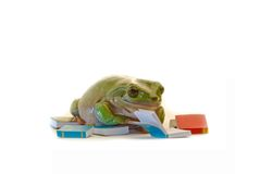 Reading. A green frog reading a book on white background Royalty Free Stock Images