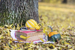 Reading in the autumn park. Book with reading glasses ans yellow pumpkin in the autumn park stock photography