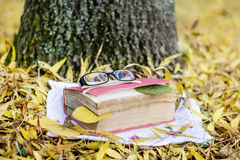 Reading in the autumn park. Book with reading glasses ans yellow pumpkin in the autumn park stock photo