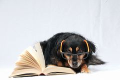 Reading Dog Royalty Free Stock Photography