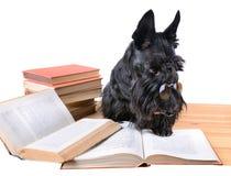 Reading dog Royalty Free Stock Images