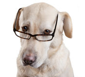 Reading Glasses Funny Dog