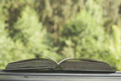 Reading in nature Stock Photos