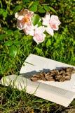 Reading outdoors Royalty Free Stock Photo