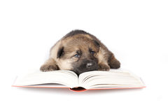 Reading puppy Stock Photography