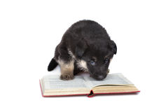 Reading puppy Stock Photos