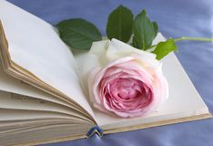 Reading romance Royalty Free Stock Photo