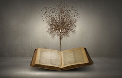 Reading and self education. Conceptual image with dry tree growing from book Stock Photos