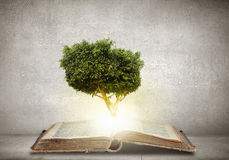 Reading and self education. Conceptual image with green tree growing from book Royalty Free Stock Image