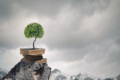 Reading and self education. Conceptual image with green tree growing from book Royalty Free Stock Photos
