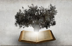 Reading and self education. Conceptual image with green tree growing from book Royalty Free Stock Photo