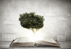 Reading and self education. Conceptual image with green tree growing from book Stock Images
