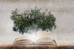 Reading and self education. Conceptual image with green tree growing from book Royalty Free Stock Images