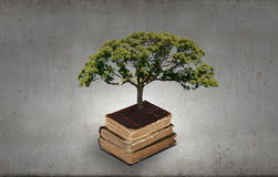 Reading and self education. Conceptual image with green tree growing from book Royalty Free Stock Photography