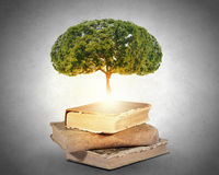 Reading and self education. Conceptual image with green tree growing from book Stock Photos