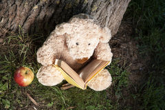 Reading teddy bear Stock Images