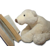 Reading teedy bear Stock Photography