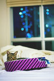 Ready for Bed. Cat tucked himself in before anyone was ready for bed Royalty Free Stock Image