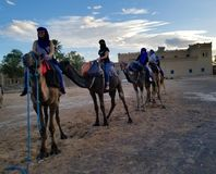 Ready for a Camel Trek in Sahara to see the Sunset! royalty free stock image