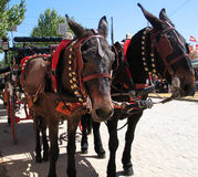 Ready carriage. Horses royalty free stock images