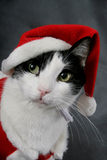 Ready for Christmas royalty free stock photography