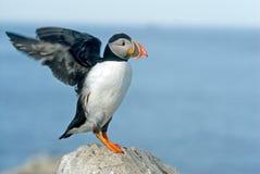 Free Ready For Take Off - Machias Island Royalty Free Stock Photo - 12739735