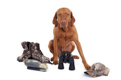 Ready for hunting Stock Photography